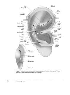 Manual de Auriculoterapia 0443071624 Ear Reflexology, Acupressure, Acupuncture, Alternative Therapies, Alternative Medicine, Ear Seeds, Holistic Medicine, Trigger Points, Kung Fu