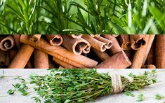 OREGANO Although oregano is best known as a spice for giving pizza and pasta an extra kick, Dr. Patrick Fratellone MD RH (AHG) FIM, a leading...