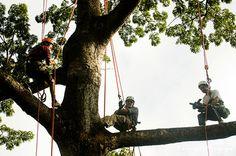 Tropical Tree Climbing - Manaus