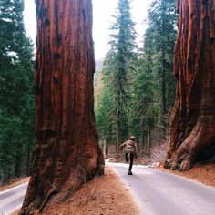 Must ride here. Sequoia National Park, Shots, Country Roads, Waves, Mountains, Instagram Posts, Plants, Fotografia, Ocean Waves