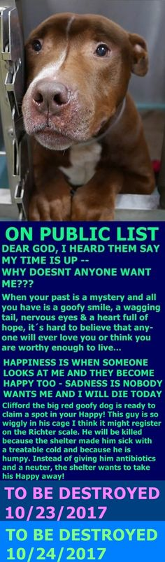 SAFE❤️❤️ 10/25/17 BY BELLA'S NY BULLIES❤️ Hello, my name is Clifford. My animal id is 9771. I am a male red brown dog at the Brooklyn Animal Care Center. The shelter thinks I am about 3 years 1 weeks old. I came into the shelter as a stray on 14-Oct-2017. http://nycdogs.urgentpodr.org/clifford-9771/#
