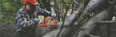 If you are looking for experienced tree care, call the expert arborists at Griggs Tree Service in Indianapolis. We are your tree and soil maintenance pros, offering disease control, tree removal and stump grinding as well as a whole host of landscape services.