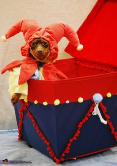 Puppy in the Box - Halloween Costume Contest via @costume_works