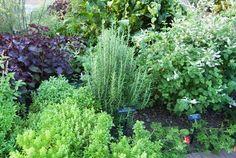 Have a garden again