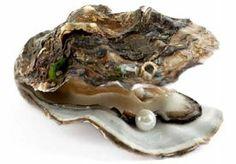 26-Dec-2013 16:44 - NÓG EEN PAREL IN EEN OESTER. Het is een kans van 1 op 35.000 duizend om een parel te vinden in een oester, weet Omroep Zeeland. Maar toch is het op één avond...