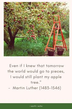 110 interesting facts and quotes about trees - i earth i echo
