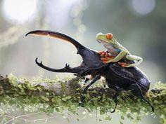 Amazing Nature Photography | iLyke