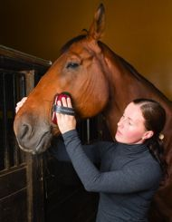 Volunteering with horses- will it improve your mental state?