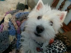 My cutie dog!