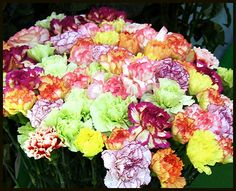 carnation flower colors carnations require well drained neutral to slightly alkaline soil - Carnation Flower Colors