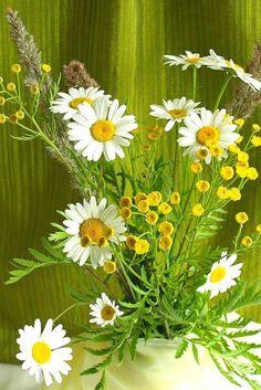 This makes me happy Love Flowers, My Flower, White Flowers, Beautiful Flowers, Wedding Flowers, Daisy Patches, Corporate Flowers, Daisy Love, Painting Lessons