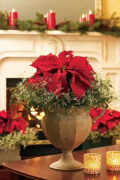 Plants make for wonderful winter decorations to spruce up your home with a natural element for the holidays. Combine poinsettias with the wispy, ethereal Diamond Frost Euphorbia.