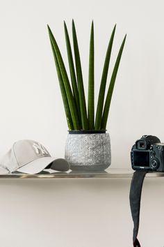 En vakker maskulin grå tone. Fargen er varm og sofistikert. #grå#grey#maskulin#alovera#plante#kamera#caps#stålhylle#stue#livingroom#gang#hall#bad#bathroom#maskulin#maling#painting#inspirasjon#inspiration#fargekart#Fargerike