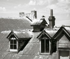 Birds on the Rooftops  Black and White Home Decor by OneDecember, $15.00