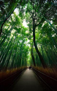 Sagano bamboo forest : Arashiyama, Kyoto, Japan / Japón by Lost in Japan, by Miguel Michán, via Flickr