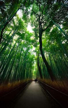 Sagano bamboo forest : Arashiyama, Kyoto, Japan / Japón by Lost in Japan, by Miguel Michán, via Flickr