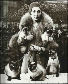 'i am siamese if you please' . lady w her five siamese cats Crazy Cat Lady, Crazy Cats, I Love Cats, Cool Cats, Siamese Cats, Cats And Kittens, Image Chat, Photo Chat, Cat Posters