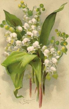 Love Lilly of the Valley.
