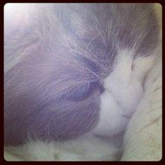 Sleepy Squiggle~