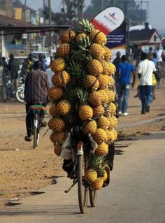Ananas mit einem Fahrrad transportieren
