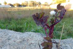 BAMBAGIA - colori, colors, fiori, flowers, giardino, rosso, sapori, selvatico