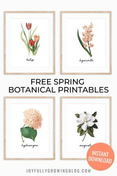 Spring botanical free printables! Download this set of four spring printable directly in the post and add it to your spring decor! This free printable is perfect for a spring living room or spring entry way display. #joyfullygrowingblog #springprintable #springdecor #freeprintable