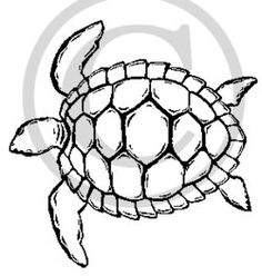 turtle outlinejpg drawing Pinterest Turtle Easy drawings