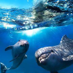 Turtle Nursery, Canvas Art, Canvas Prints, Art Prints, Sea Otter, Whale Watching, Ocean Life, Marine Life, Gaia
