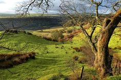 23 stunning Autumn walks that showcase the Welsh countryside St Brides, Magical Pictures, Pembrokeshire Coast, Visit Wales, Autumn Walks, Snowdonia, Beautiful Places In The World, Places Of Interest, Beautiful Landscapes