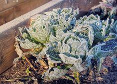 Hochbeet Im Winter Nutzen Ideen Tipps Wintergemuse Anbauen Hochbeet Winterpflanzen