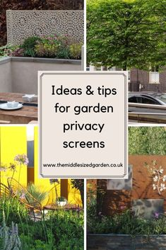 Would you like more privacy from your neighbours? You don't need tall evergreen trees to create a secret garden space, just one of these  garden privacy screen ideas to keep your patio private. #gardening #garden #middlesizedgarden #backyard Privacy Trellis, Garden Privacy Screen, Easy Garden, Home And Garden, Low Maintenance Garden Design, Evergreen Trees, Backyard, Patio, Garden Spaces
