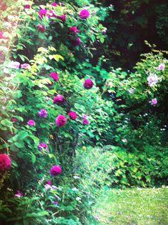 Rosebusker Plants, Plant, Planets