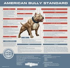 """The #ABKC #AmericanBully Kennel Club Standards Graphics. Also featured in the Terminology of the American Bully's Structure, by Christopher """"BTK"""" Bennett."""