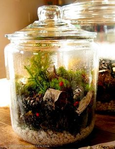 Terrarium Tutorial (learn the basics, then build from there!). Photo/Post: Michaela Medina - thegardenerseden.com