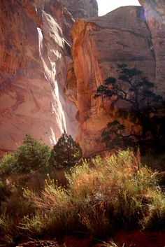 Capitol Reef National Park 10 Incredible Parks Everyone Should Visit Once