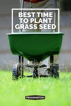 Timing plays an important role for growing a successful lawn. Alternatives to Grass for your Garden Shrubs, Shade Garden, Garden Yard Ideas, Lawn And Garden, Patio, Backyard, Naruto, Growing Grass, Lawn Care Tips