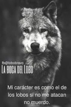 Tumblr Quotes, Love Quotes, Wolf Life, Malinois Dog, Quotes En Espanol, Graffiti Lettering, Strong Women, Husky, Weird