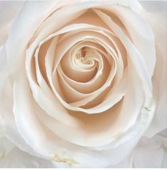 White Anemone, White Roses, All Flowers, Wedding Flowers, Italian Ruscus, Flowers Wholesale, Manzanita Branches, Fragrant Roses, Star Of Bethlehem