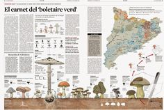 Грибные места Каталонии и как собирать грибы