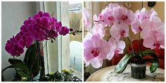 Toto je jediný správny spôsob, ako prebudiť k životu aj staršiu orchideu: A už nemusíte zháňať drahé hnojivá a výživu z obchodu! House Plants, Diy And Crafts, Floral Wreath, Home And Garden, Wreaths, Home Decor, Gardening, Flowers, Cactus