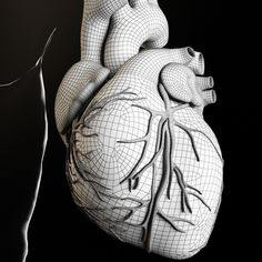 Heart and Body 3D Model Download | fbx obj max - 3D Squirrel
