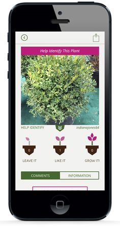 Need Help Identifying a Plant? Upload it to GrowIt! and see what the experts think! Available for on the App Store Shade Garden, Garden Plants, House Plants, Container Gardening, Gardening Tips, Balcony Gardening, My Secret Garden, Plantation, Lawn And Garden