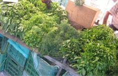 More green! Saturday market in Chania, Crete