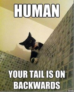 Oh,Oh!!!! the cats must feel very sorry for the human with the big tail at my home! :{