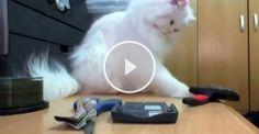 Katzen sind einfach fies...