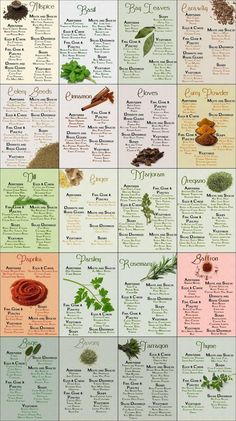 Culinary Infographics - Spices Herbs