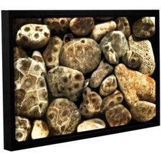 ArtWall Kevin Calkins Petoskey Stone Collage Gallery-Wrapped Floater-Framed Canvas, Size: 16 x 24, Black