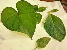 Aprenda como customizar camiseta usando folhas de plantas para estampar.