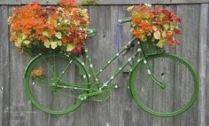 I love everything about this idea!  Polka dot painted bike / planter / fence art
