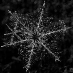 Snowflakes - The Quiver Of Winter All Nature, Science And Nature, Amazing Nature, I Love Snow, Fotografia Macro, Ice Crystals, Winter Magic, Snow And Ice, Winter Beauty